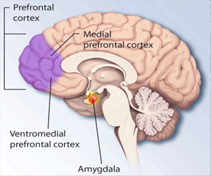 Prefrontal cortex by National Institute of Mental Health