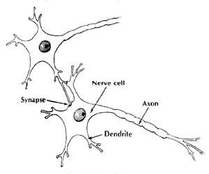 Neuron synapse by Olga Lednichenko