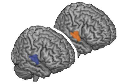 As two people conversing rely more and more on previously shared concepts, the same area of their brains -- the right superior temporal gyrus -- becomes more active (blue is activity in communicator, orange is activity in interpreter).