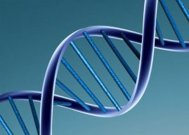 OCD-like behavior linked to genetic mutation, study finds