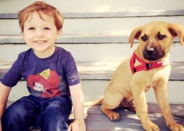 Dogs and toddlers show similarities in social intelligence