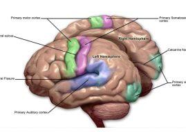 Stuttering: Stop signals in the brain disturb speech flow