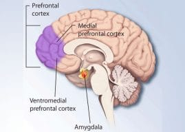 In depressed people, the medial prefrontal cortex exerts more control over other parts of the brain