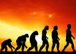 Scientific reasoning ability does not predict acceptance of evolution among religious individuals, study finds