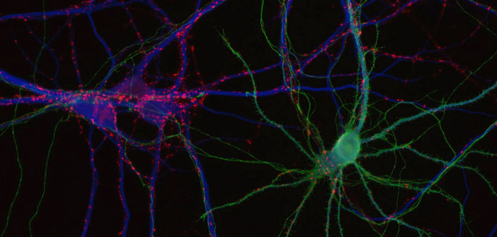 Small molecules researched for the regeneration of dopaminergic neurons in Parkinson's disease