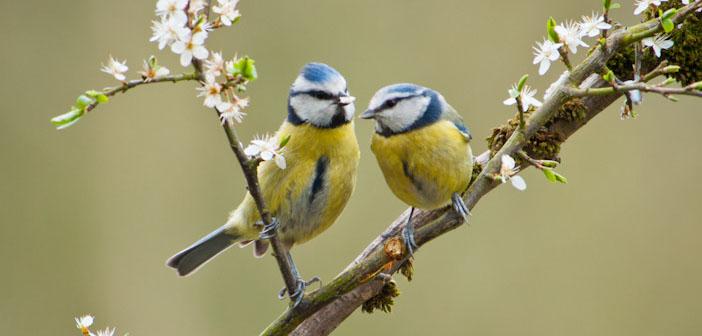 Tits Birds 96