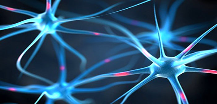 Researchers: Brain activity boosts processes that promote ...