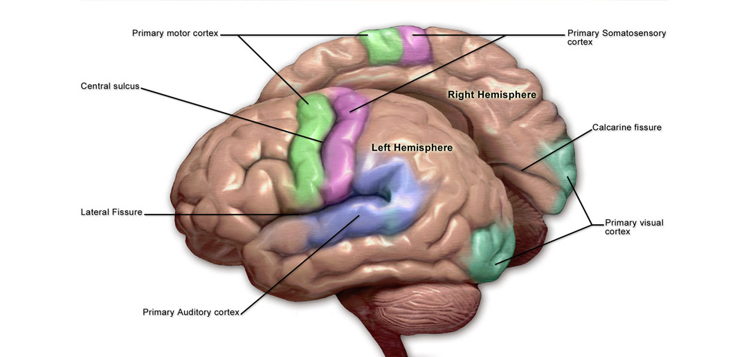 Scientists discover neural mechanisms that indicate that we actively forget as we learn