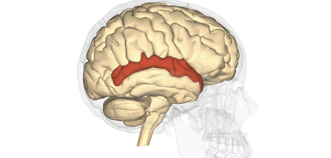 Brain Scans During Communication Game Pinpoint Site For Meeting Of