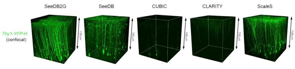Confocal imaging of Thy1-YFP-H mouse (P72-84) cerebral cortex using different optical clearing methods. Images were taken from the surface of a hemi-brain samples under the same imaging conditions using a 20× air objective lens. Grids in transmission images are 2.6 × 3.2 mm.