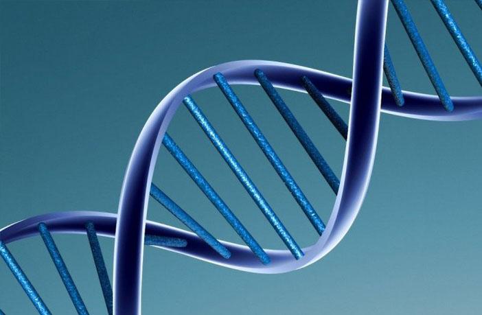 OCD-like behavior linked to genetic mutation, study finds