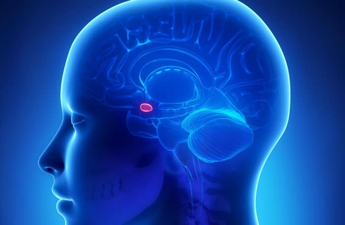 New brain target for potential treatment of social pathology in autism spectrum disorder