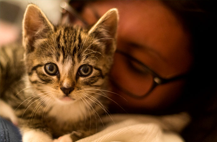 Is there really a link between owning a cat and mental illness? Study examines Toxoplasma gondii infections