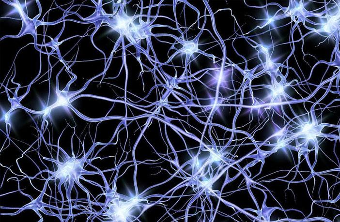 """Vaizdo rezultatas pagal užklausą """"neurons"""""""