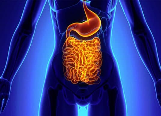 Gut microbes may contribute to depression and anxiety in obesity