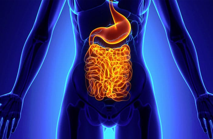 How the gut influences brain disease