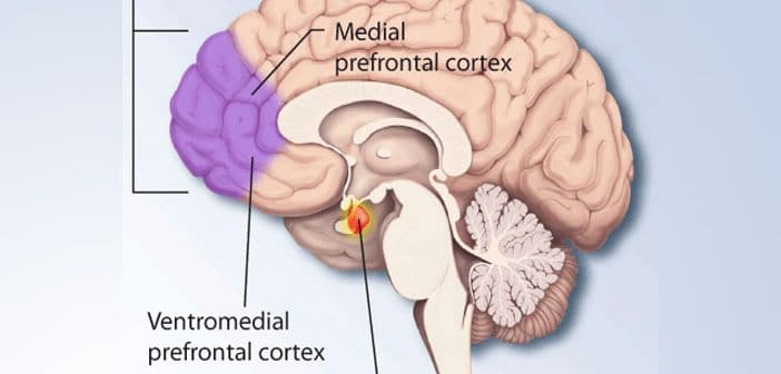 Neuroimaging study links brain activity in the prefrontal cortex to certain psychopathic traits