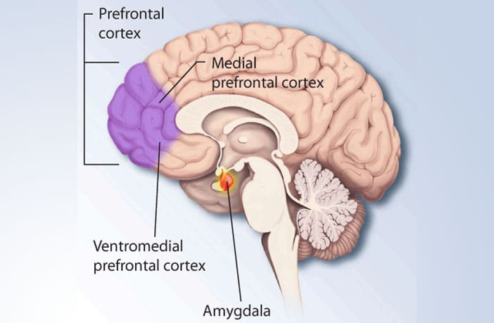 in depressed people the medial prefrontal cortex exerts more